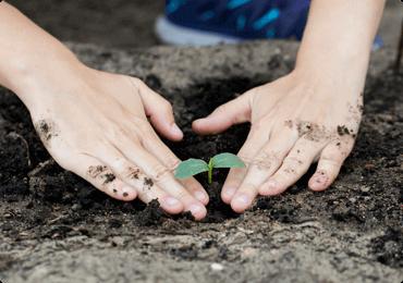 Foto de mãos plantando uma muda