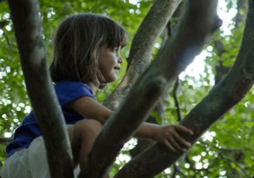 Criança no topo da árvore admirando a paisagem